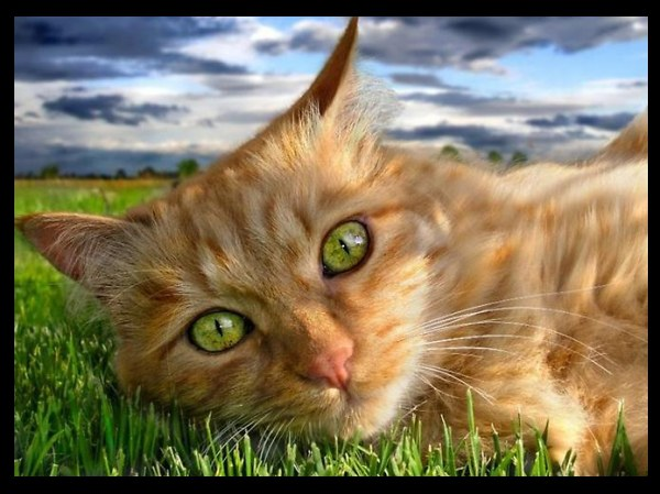 Фото Кот на травке с яркими глазами
