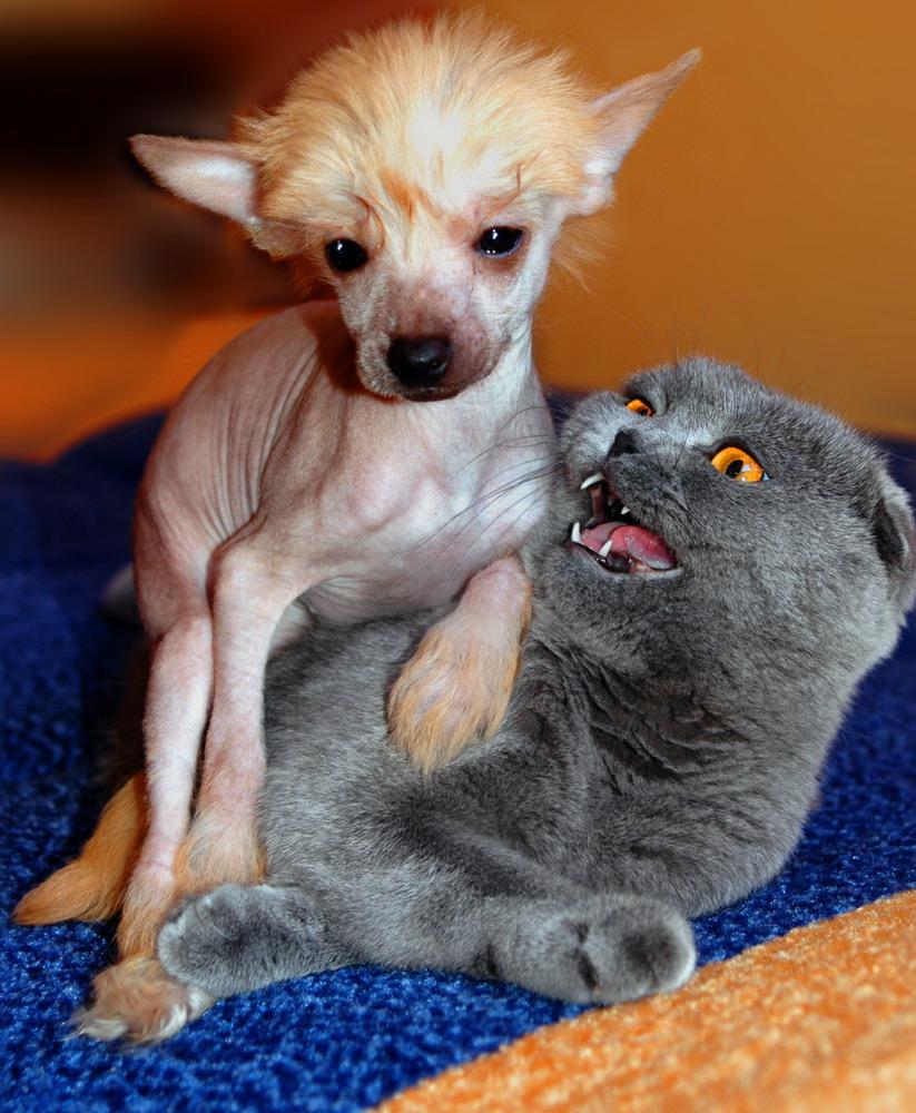 Открытка, картинки с надписями кошки собаки