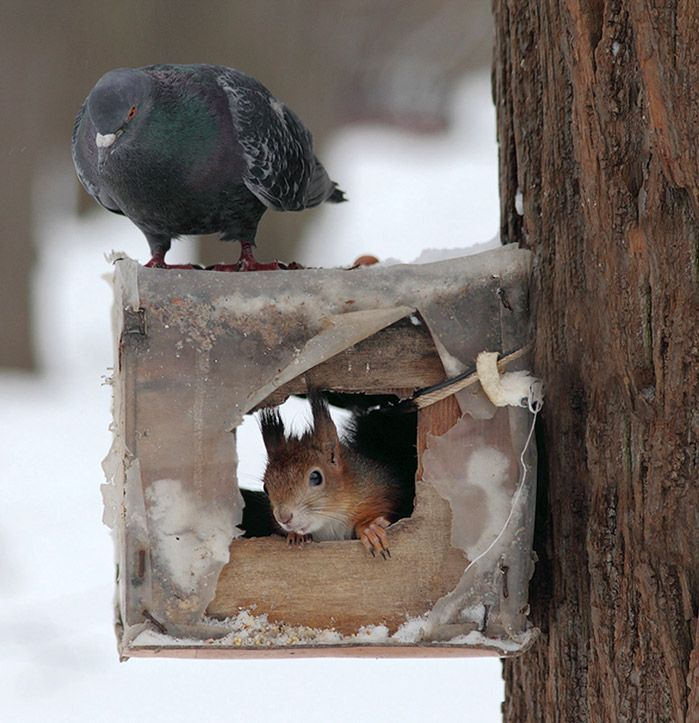 Фото голубь и белка