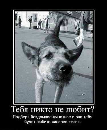 Фото Тебя никто не любит? Подбери бездомное животное и оно тебя будет любить сильнее жизни.