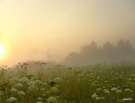 Фото Поле цветов в тумане