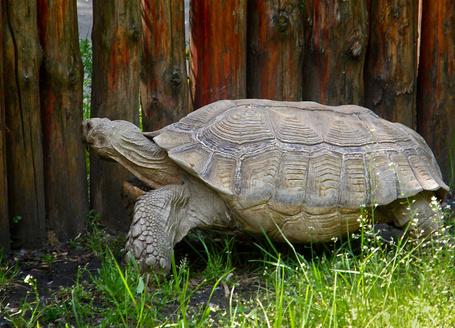Фото Черепаха смотрит в дырку (© Штушка), добавлено: 01.03.2011 23:34