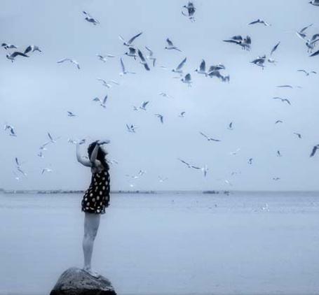 Фото Лети с чайками в небо (© bakamono_chan), добавлено: 02.03.2011 00:46