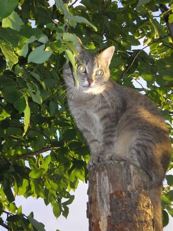 Фото Кот на дереве (© Штушка), добавлено: 02.03.2011 19:54
