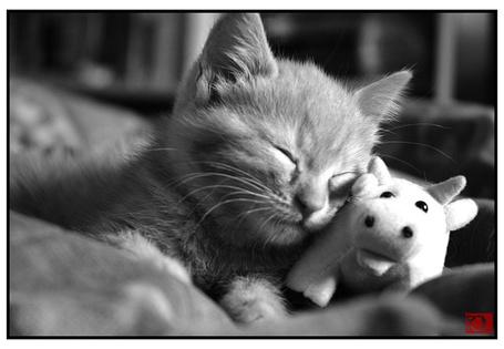 Фото Котёнок спит с игрушечной коровой (© Юки-тян), добавлено: 06.03.2011 15:14