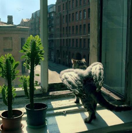 Фото Кошка с крыльми готовится к прыжку из окна (© Volkodavsha), добавлено: 07.03.2011 14:40