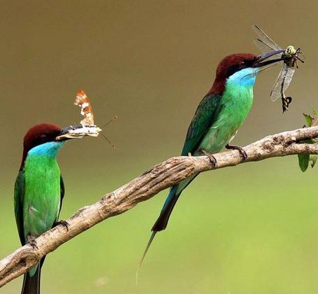 Фото Птички на ветке,у каждой своя добыча (© Volkodavsha), добавлено: 07.03.2011 17:41