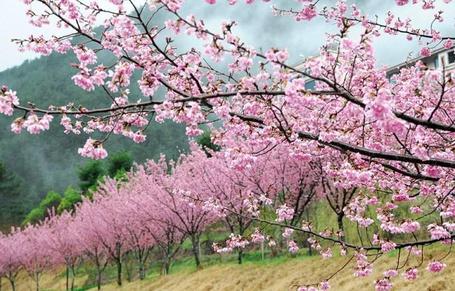 Фото Сад деревьев