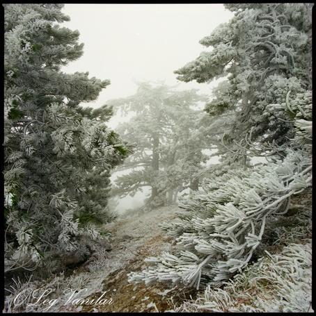 Фото *январь на Ай-Петри* - Oleg Vanilar (© Юки-тян), добавлено: 08.03.2011 23:18