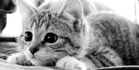 Фото Грустный котенок