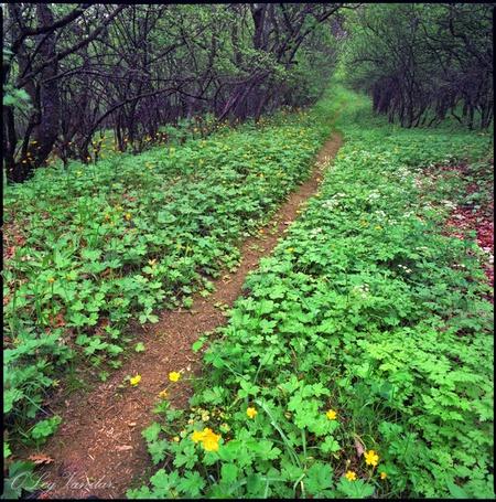Фото 'Прогулки вокруг Святой' - Oleg Vanilar (© Юки-тян), добавлено: 10.03.2011 23:23