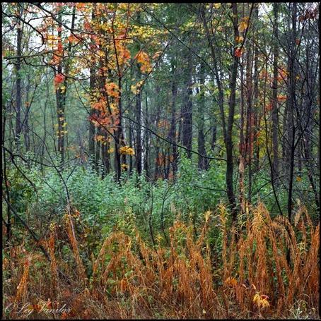 Фото 'Осеннее пламя' - Oleg Vanilar (© Юки-тян), добавлено: 11.03.2011 16:15