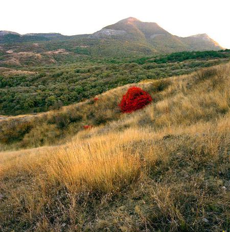 Фото 'Красный куст на фоне Святой горы' - Oleg Vanilar (© Юки-тян), добавлено: 11.03.2011 22:49