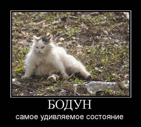 Фото Бодун самое удивительное состояние (© Штушка), добавлено: 12.03.2011 22:38