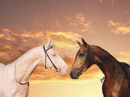 Фото Лошади белой и гнедой масти на фоне неба