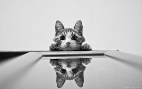Фото Кошка и зеркало (© Шепот_дождя), добавлено: 16.03.2011 00:44