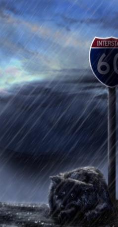 Фото Промокший от дождя волк лежит на дороге