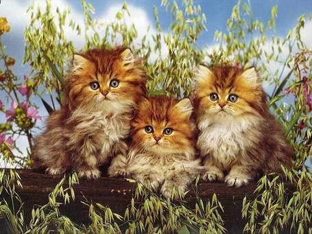 Фото Три котёнка сидят на брёвнышке , вокруг цветы (© Volkodavsha), добавлено: 18.03.2011 16:36