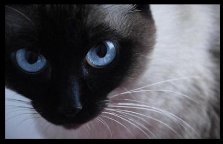Фото Голубые глаза (© Штушка), добавлено: 18.03.2011 19:04
