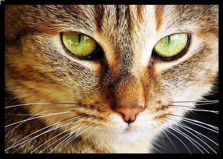 Фото Красивый кот (© Штушка), добавлено: 18.03.2011 19:05