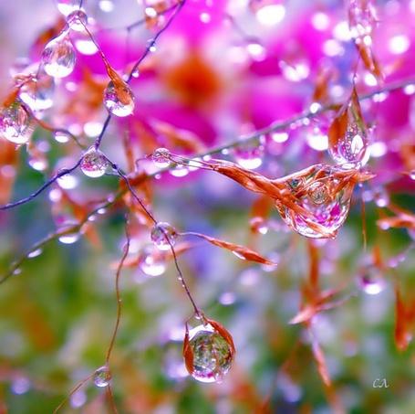 Фото Капельки на розовых цветах (© Штушка), добавлено: 19.03.2011 01:52