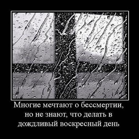 Фото Многие мечтают о бессмертии, но не знают, что делать в дождливый воскресный день (© Флориссия), добавлено: 24.03.2011 19:27