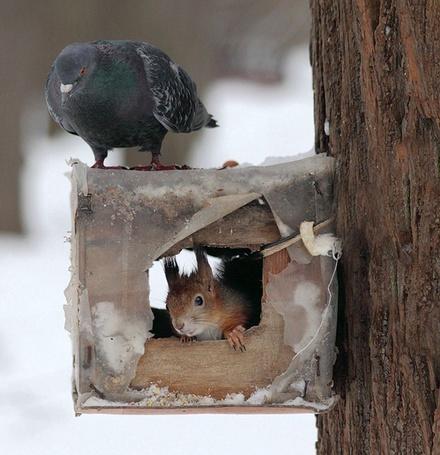 Фото Голубь и белка (© Шепот_дождя), добавлено: 29.03.2011 00:56