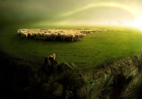 Фото Овцы пасутся на лугу (© Флориссия), добавлено: 30.03.2011 17:33