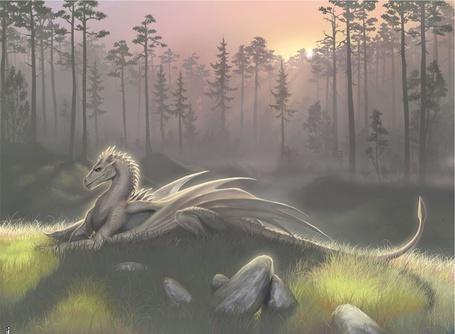 Фото Белый дракон греется на солнце в лесу (© Флориссия), добавлено: 30.03.2011 17:59