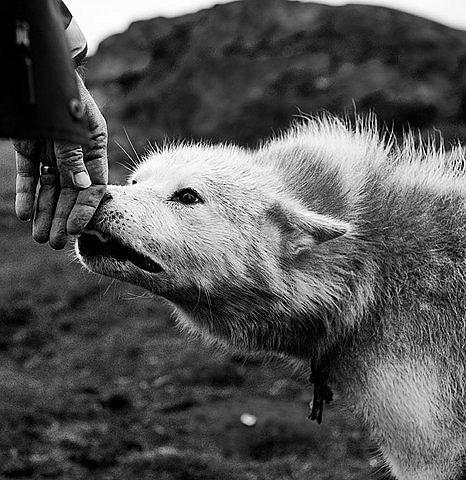 Фото хозяин и собака