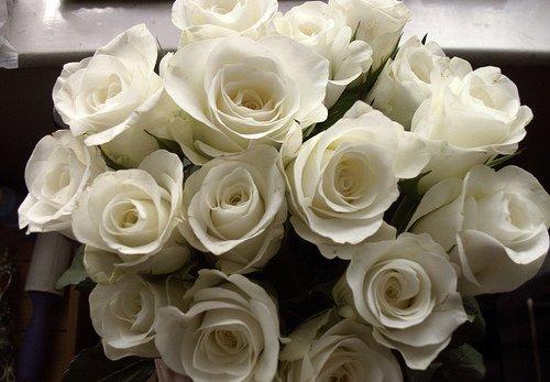 Тэги красивые цветы