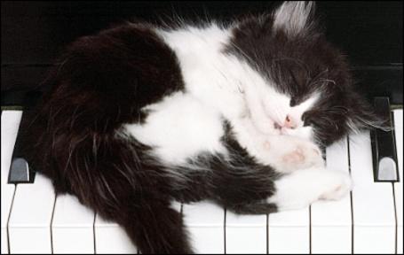 Фото Кот лежит на клавишах (© Юки-тян), добавлено: 01.04.2011 16:45