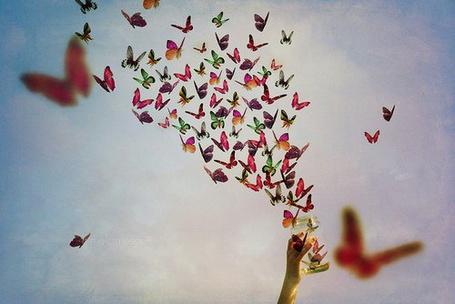 Фото Много красивых бабочек вылетает из банки на свободу (© ColniwKo), добавлено: 02.04.2011 13:24