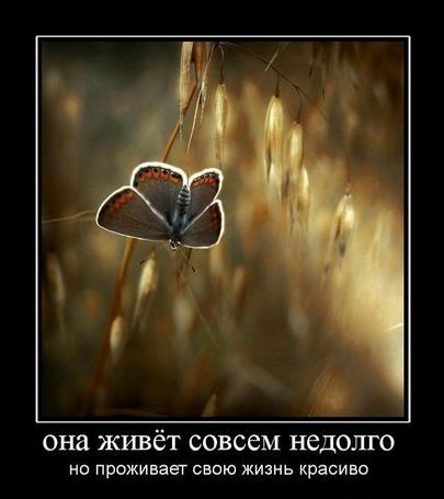 Фото Она живёт совсем недолго, но проживает жизнь красиво (© Флориссия), добавлено: 02.04.2011 14:29
