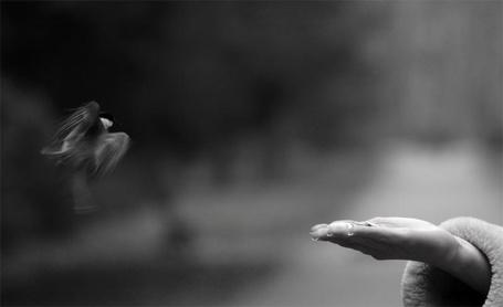 Фото Синичка в полете садится на руку за кормом