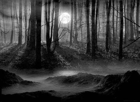 Фото Туманный лес (© Флориссия), добавлено: 06.04.2011 13:59