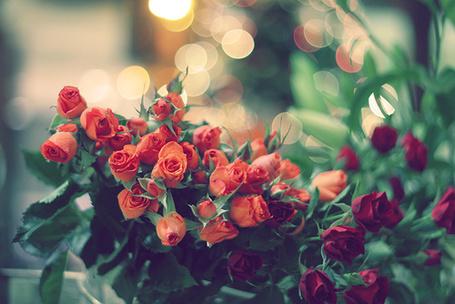 Фото Букеты красных роз (© Штушка), добавлено: 09.04.2011 20:32