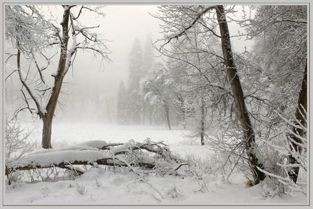 Фото Заснеженная лесная поляна (© Шепот_дождя), добавлено: 10.04.2011 00:31