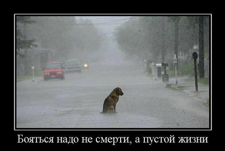 Фото Бояться надо не смерти, а пустой жизни (© Флориссия), добавлено: 12.04.2011 16:29