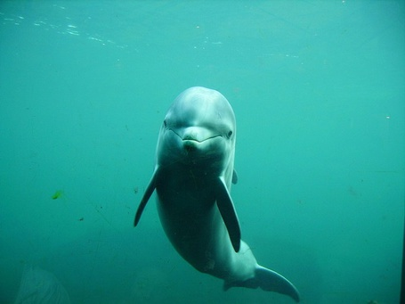 Фото Улыбающийся дельфин (© Niar), добавлено: 12.04.2011 22:16