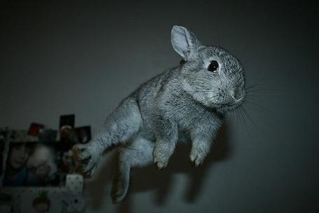 Фото Летающий кролик (© Niar), добавлено: 15.04.2011 11:41