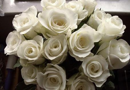 Фото Букет белых роз