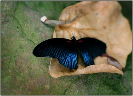 Фото Красивая бабочка на листе (© Штушка), добавлено: 22.04.2011 00:49