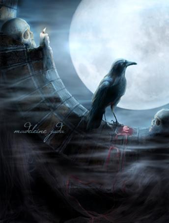 Фото Ворон смотрит на луну (Madeleine Juda) (© Флориссия), добавлено: 25.04.2011 18:02