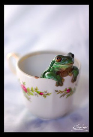 Фото Лягушка сидит в чашке (© Штушка), добавлено: 26.04.2011 23:33