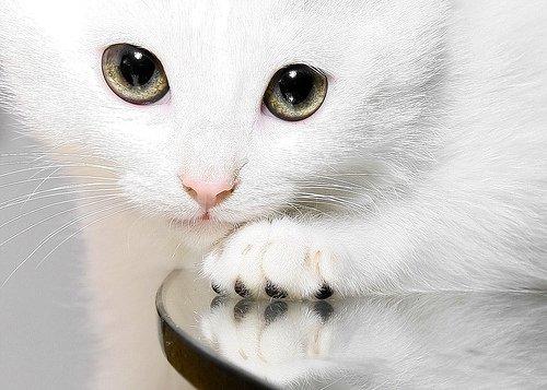 Фото Красивая кошка с яркими глазами