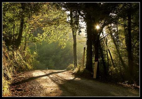 Фото Дорога в лесу (© Штушка), добавлено: 02.05.2011 11:58