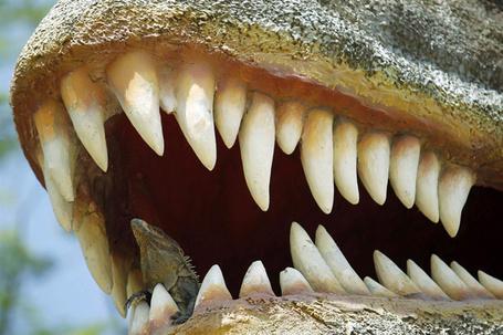 Фото Игуана отдыхает во рту пластиковой фигуры динозавра в парке Мегафауны (© Niar), добавлено: 02.05.2011 13:53