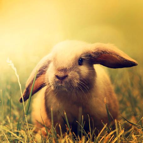 Фото Кролик сидит в траве (© D.Phantom), добавлено: 04.05.2011 23:46