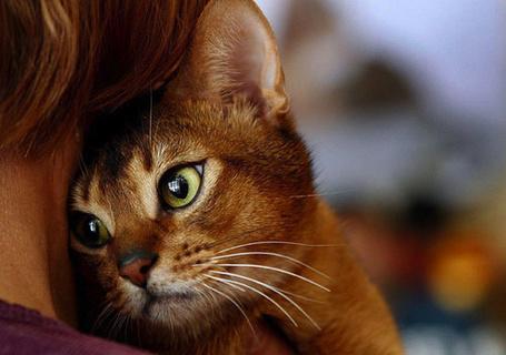 Фото Кошка прижалась к девушке (© Штушка), добавлено: 06.05.2011 17:53